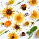Autumn Festive Floral Background - PhotoDune Item for Sale