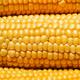 Ripe yellow corn, top view - PhotoDune Item for Sale