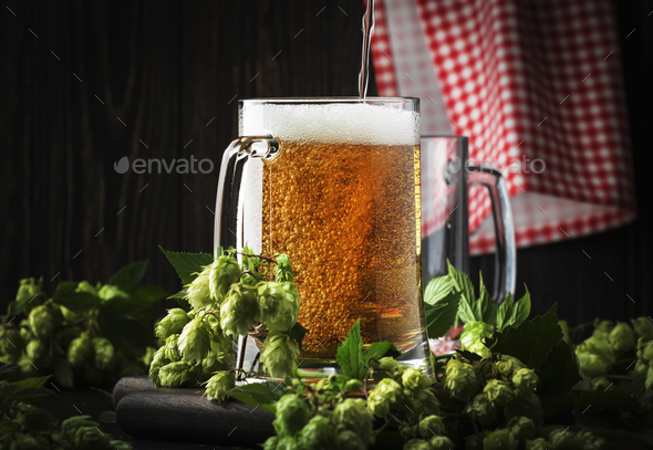 Glasses with czech light beer, dark night bar counter, hop cones and vine, selective focus - Stock Photo - Images