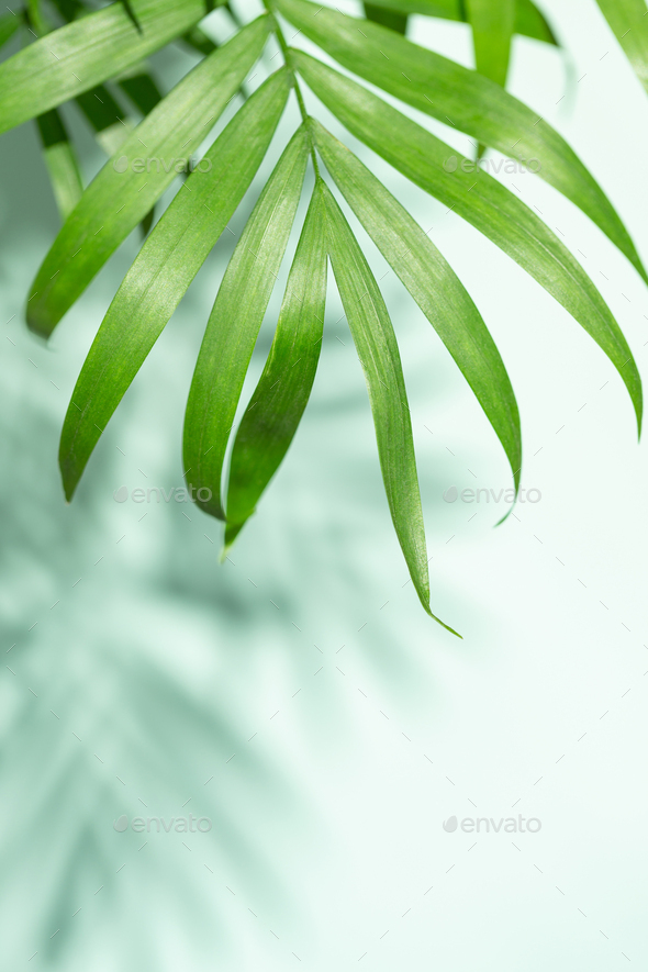 Palm Leaves and Shadows of Palm Leaves. - Stock Photo - Images