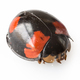 ladybird isolated on white - PhotoDune Item for Sale