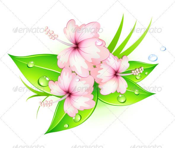 Hibiscus Flowers - Flowers & Plants Nature