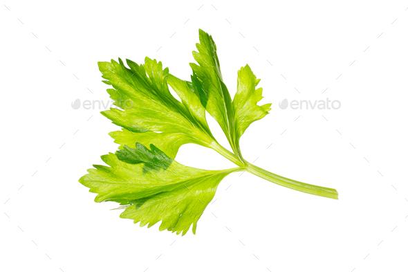 Fresh celery sprig isolated on white background. - Stock Photo - Images