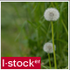 Grass View Pack - VideoHive Item for Sale