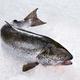 Seafood Fish - PhotoDune Item for Sale