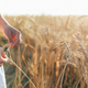 Little girl hands touching a golden wheat ear in the wheat field, sunset light, flare light. - PhotoDune Item for Sale