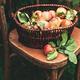 Fresh Ripe apples in the basket. Autumn food season concept. - PhotoDune Item for Sale