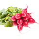 bunch of fresh red radish with greens isolated - PhotoDune Item for Sale