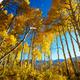 Autumn forest - PhotoDune Item for Sale