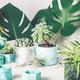 Planting succulent plant in pot - PhotoDune Item for Sale