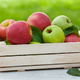 Fresh garden green and red apples in box - PhotoDune Item for Sale