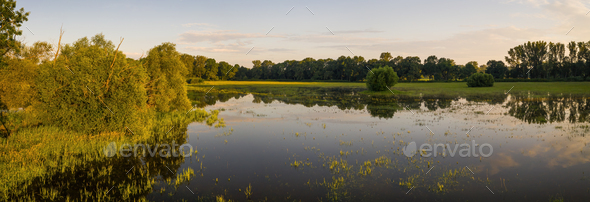 Panoramic view on flooded meadow in summer at sunrise - Stock Photo - Images