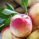 Fresh white nectarines in a wooden bowl, selective focus - PhotoDune Item for Sale