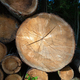 Cross section of the tree trunk - PhotoDune Item for Sale