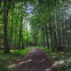 Empty path through the forest - PhotoDune Item for Sale