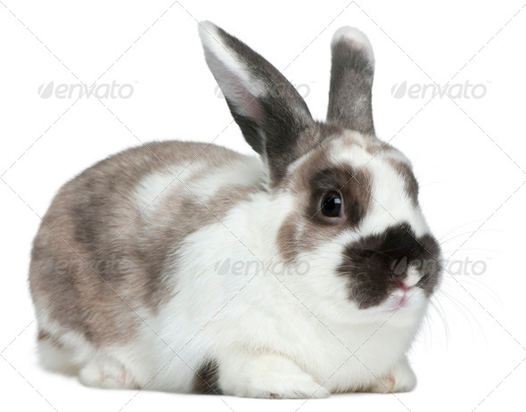 Rabbit in front of white background - Stock Photo - Images