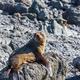 Seal - PhotoDune Item for Sale