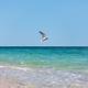Sea gull - PhotoDune Item for Sale