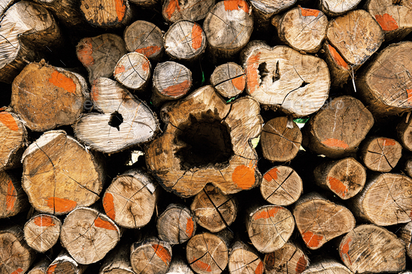 Log piles with texture - Stock Photo - Images