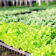Seedling of organic vegetables on trays - PhotoDune Item for Sale