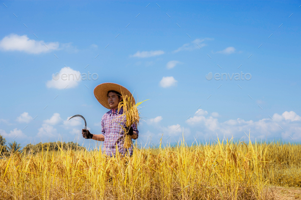 Farmer standing with a sickle on field - Stock Photo - Images