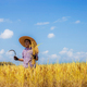 Farmer standing with a sickle on field - PhotoDune Item for Sale