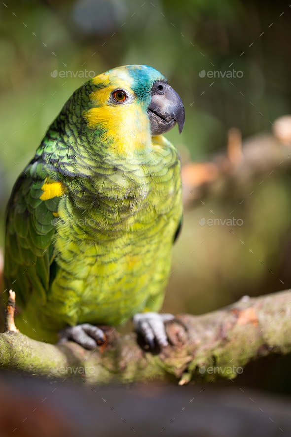 Parrot portrait of bird. Wildlife scene from tropic nature. - Stock Photo - Images
