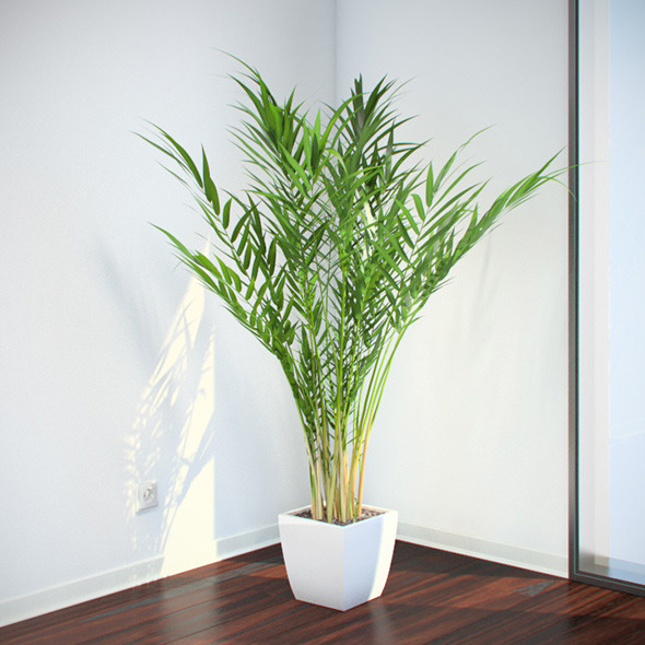 Areca Palm - 3DOcean Item for Sale