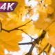 Autumn Yellow Leaf Fall - VideoHive Item for Sale