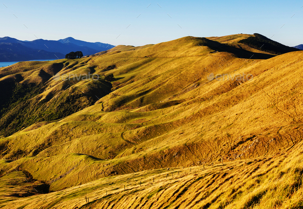 New Zealand hills - Stock Photo - Images