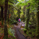 New Zealand forest - PhotoDune Item for Sale