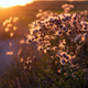 Sunset over the summer meadow - PhotoDune Item for Sale