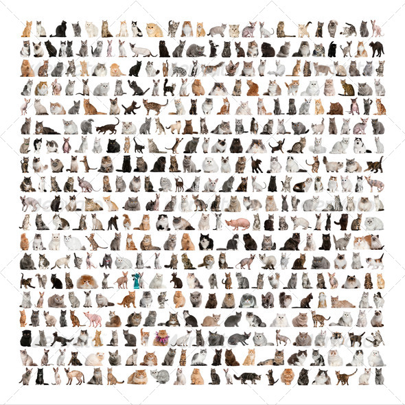 Large group of 471 cats breeds in front of a white background - Stock Photo - Images