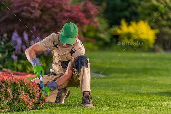 Worker Trimming Bushes In Residential Garden.