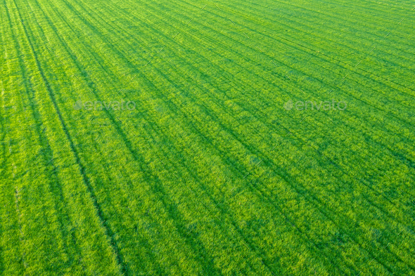 Rows Of Crops From The Air - Stock Photo - Images