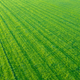 Rows Of Crops From The Air - PhotoDune Item for Sale