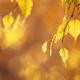 Autumn background with orange, yellow birch leaves and golden sun lights - PhotoDune Item for Sale