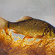 Alive young crucian carp diving in river water under surface - PhotoDune Item for Sale