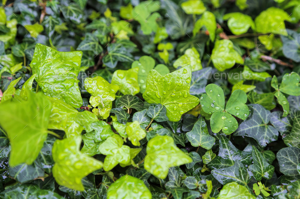 Close-up of wet plants with water drops, natural bright green background - Stock Photo - Images