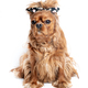 Funny dog with messy hair - PhotoDune Item for Sale