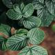 Moody macro green foliage. - PhotoDune Item for Sale