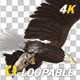 Bald Eagle with Salmon Fish - 4K Flying Loop - Down Angle - VideoHive Item for Sale