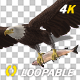 Bald Eagle with Salmon Fish - 4K Flying Loop - Side Angle II - VideoHive Item for Sale
