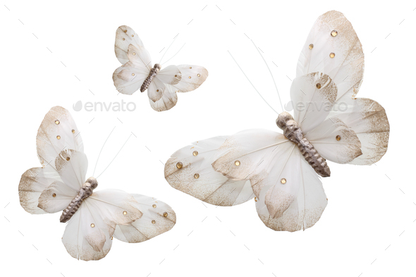 Butterflies - Stock Photo - Images