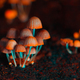 Orange psilocybin mushrooms - PhotoDune Item for Sale