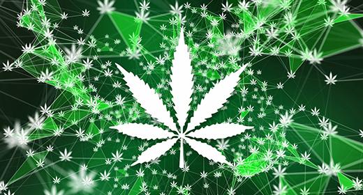Marijuana Cannabis Ganja