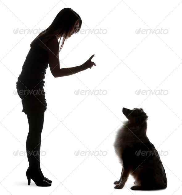 Young woman training Australian Shepherd dog in front of white background - Stock Photo - Images