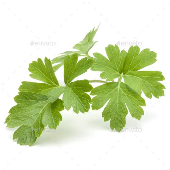 Fresh parsley herb leaves  isolated on white background - Stock Photo - Images