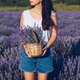 Young woman holding wicker basket with lavender flowers in field - PhotoDune Item for Sale