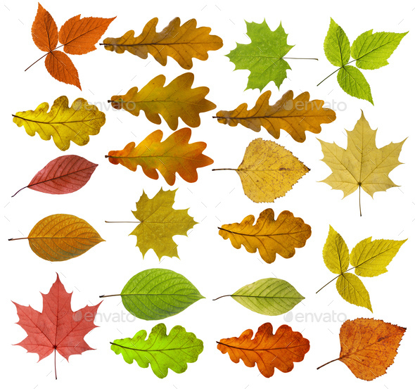 Colorful And Bright Background Made Of Fallen Autumn Leaves - Stock Photo - Images